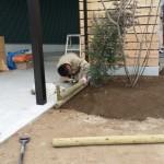 親方は職人さんたちの植栽位置を確認してから枝を切り落とし、形を整えているところです。